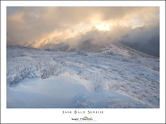 Jane Bald Sunrise