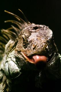 Reptilium 2007