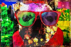 vivid colors 6