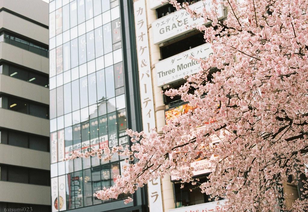 2018-03-17 上野公園桜模様 KODAK PORTRA 160 003
