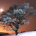 Nuit glaciale. by Valentin le luron