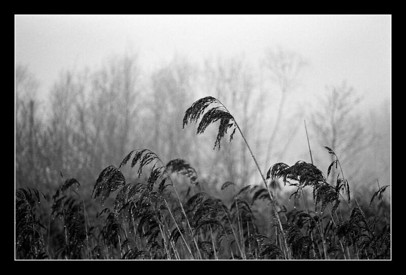 FILM - Misty grass
