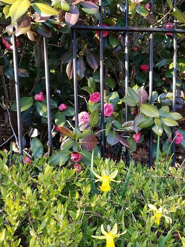 Flowers in Georgetown