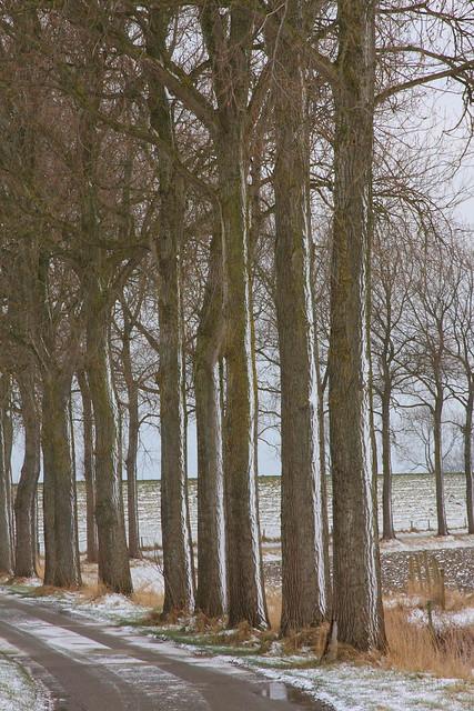 Winter trees.