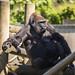 <p><a href=&quot;http://www.flickr.com/people/technodean2000/&quot;>technodean2000</a> posted a photo:</p>&#xA;&#xA;<p><a href=&quot;http://www.flickr.com/photos/technodean2000/40902295092/&quot; title=&quot;Bristol zoo gorilla&quot;><img src=&quot;http://farm5.staticflickr.com/4788/40902295092_3e0bb8d1e3_m.jpg&quot; width=&quot;192&quot; height=&quot;240&quot; alt=&quot;Bristol zoo gorilla&quot; /></a></p>&#xA;&#xA;