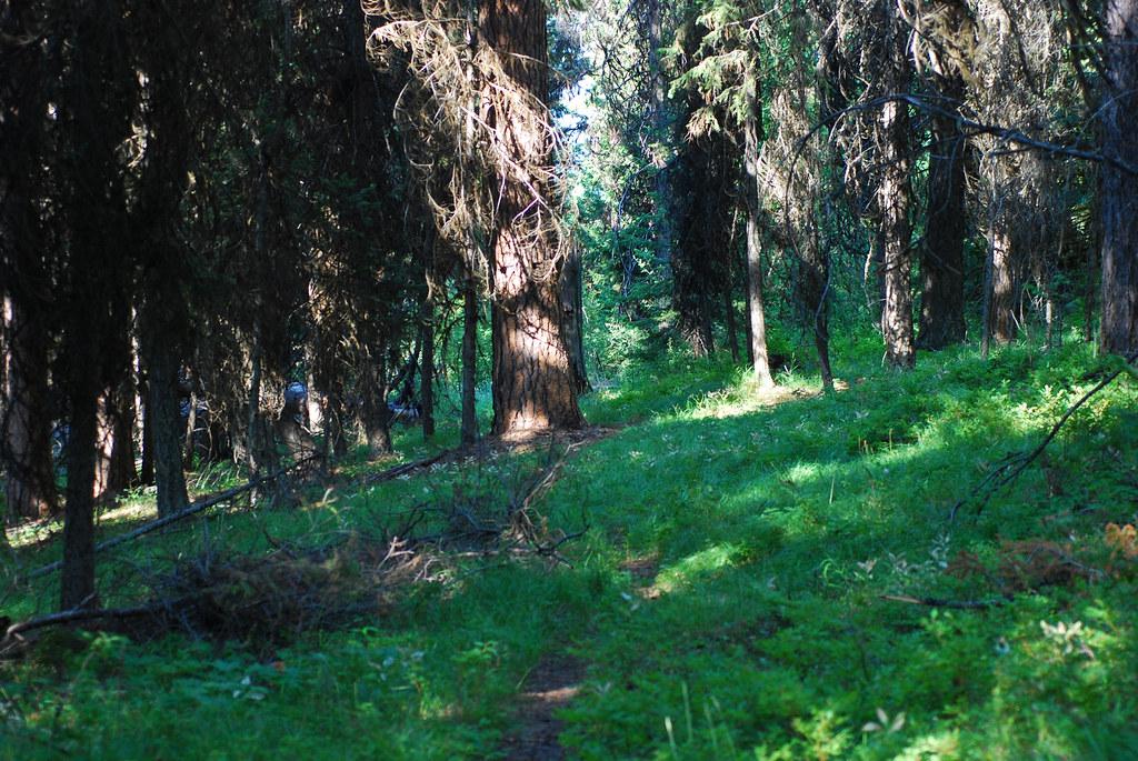USFS trail 205