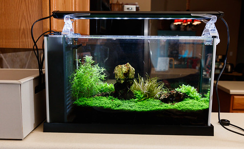 "20"" Finnex Planted+ 24/7 SE on high tech planted aquarium"