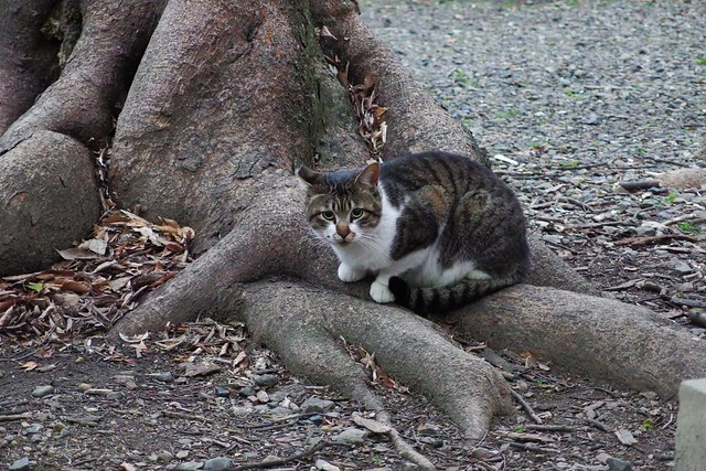 Today's Cat@2018-03-09