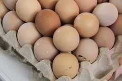 Set of chicken eggs