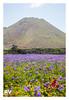 VOLCAN de La Corona - 2018-1536b by ROBERTO VILLAR -PHOTOGRAPHY-