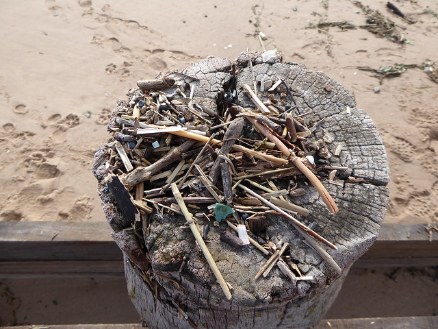 Debris on groyne post at Dawlish Warren
