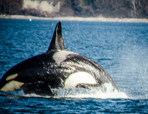 Whale Watching with Island Adventures-230