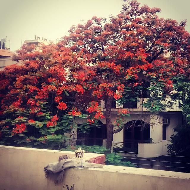 Spring in Delhi: Sarvodaya Enclave