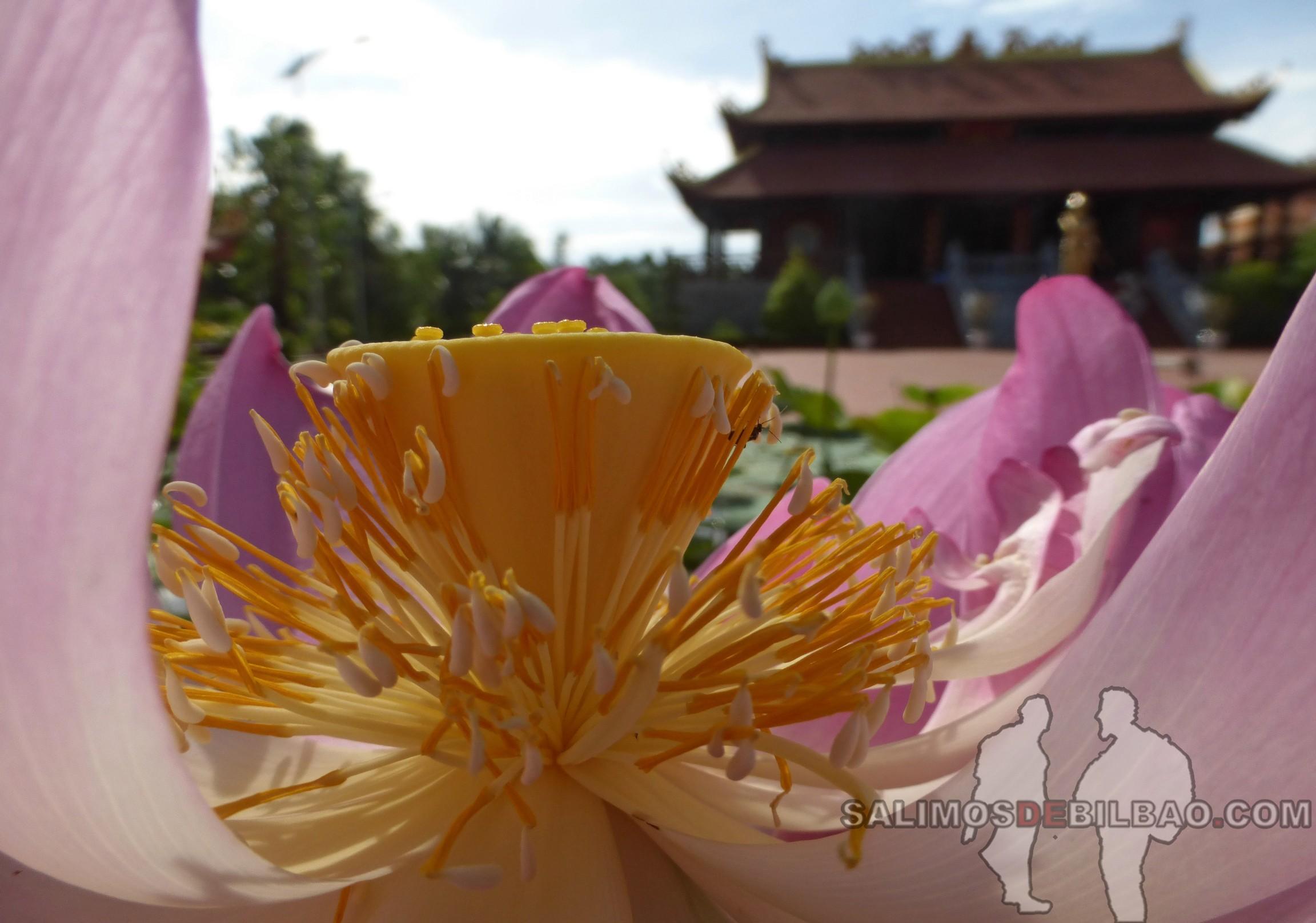 0138. Flor de loto, Pagoda Dinh Nguyen Trung Truc, Noreste de Phu Quoc