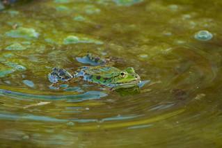 Frog life 1