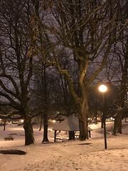 Les vieux marronniers la nuit sous la neige