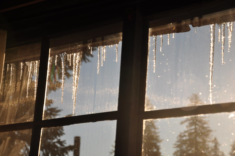 Morning icicles