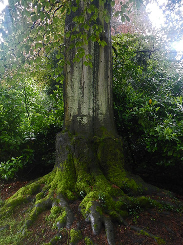 A classic fairy-tale tree at Newstead Abbey in England