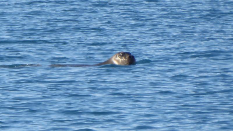 Tay Seal