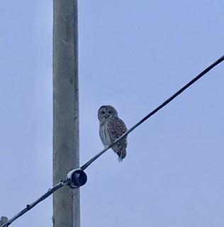 Al the Owl2
