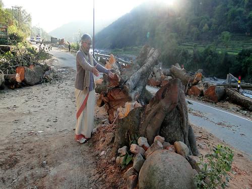 केदारनाथ हाईवे पर निर्ममता से काटा गया पीपल का पेड़