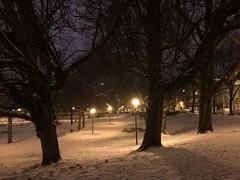 Lumière sur la neige derrière les troncs de marronniers