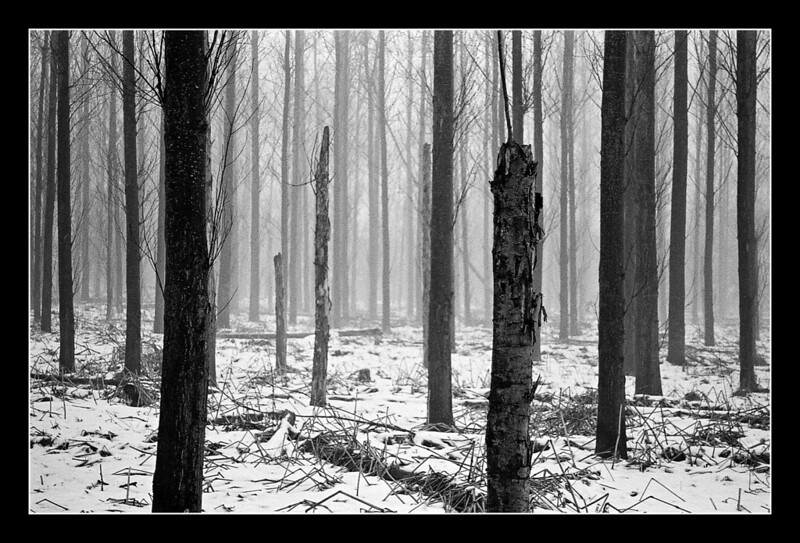 FILM - Barcode forest