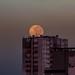 Luna del amanecer.jpg by danr19f