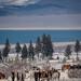 Wild Horses at Mono Lake