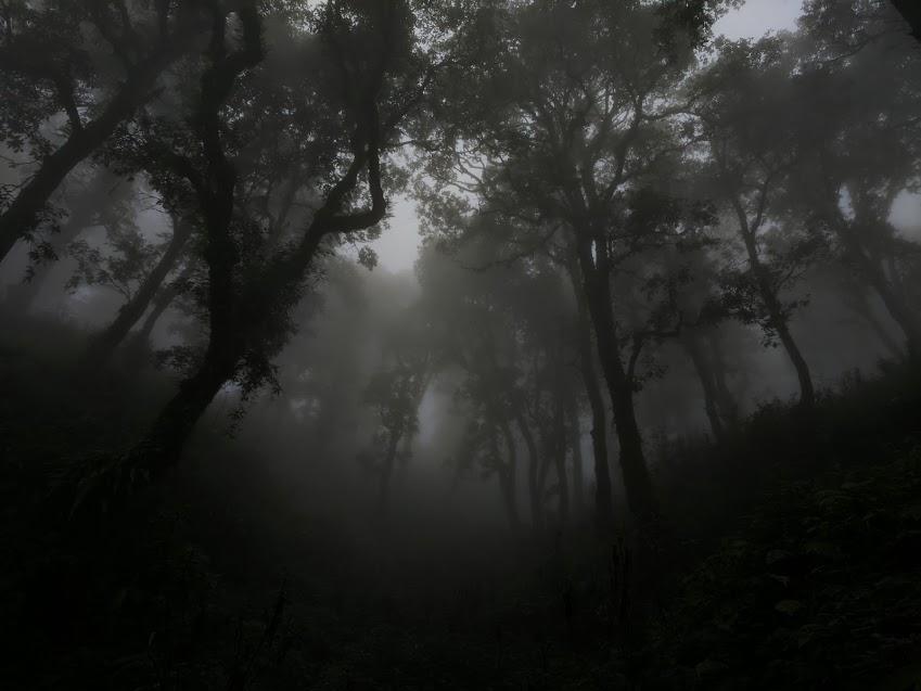 Misty Monsoons of Mussoorie (1)