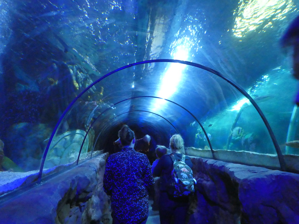 SeaLife Centre, Great Yarmouth