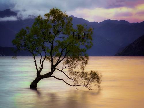 lake newzealand sunset landscape scenic wanakatree