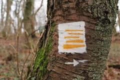 Follow the trees