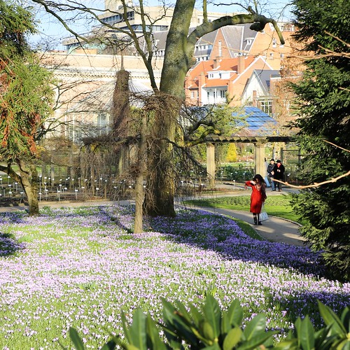 Early spring in the botanical garden of Leuven