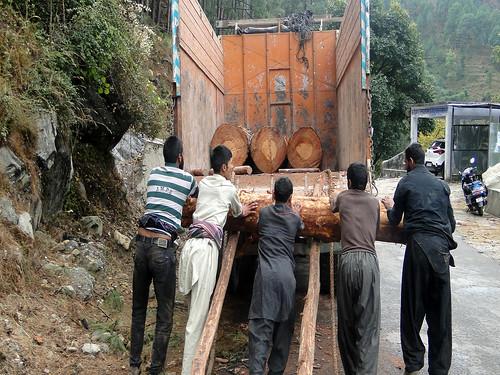 नंदप्रयाग- बद्रीनाथ हाईवे पर कटे हुए पेड़ों को लादते श्रमिक