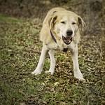 2015-02-10 um 14-02-07 - Old Dog Bokeh