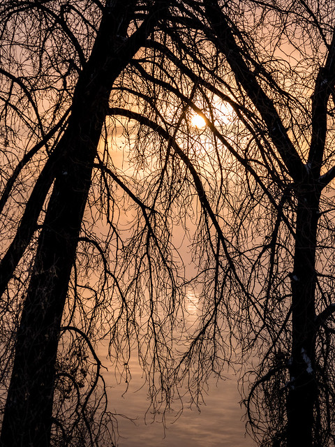 sunrise through the trees
