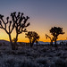 Mojave Desert Sunrise by Jeff Sullivan (www.JeffSullivanPhotography.com)