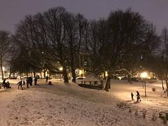 Le parc le soir sous la neige