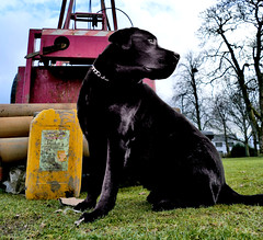 dog by the drill