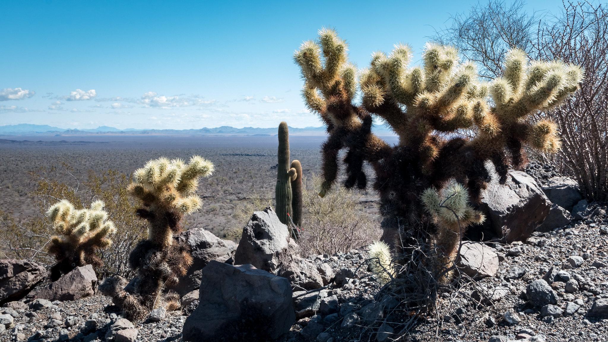 El Pinacate - Sonora - [Mexique]