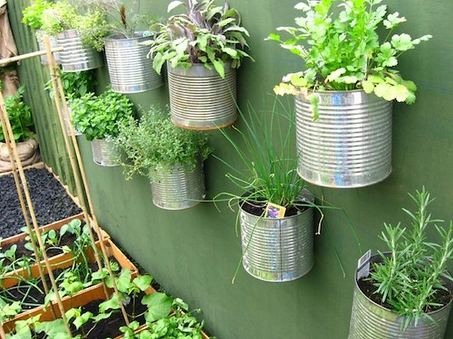 Grow herbs in tin, Canon POWERSHOT A570 IS