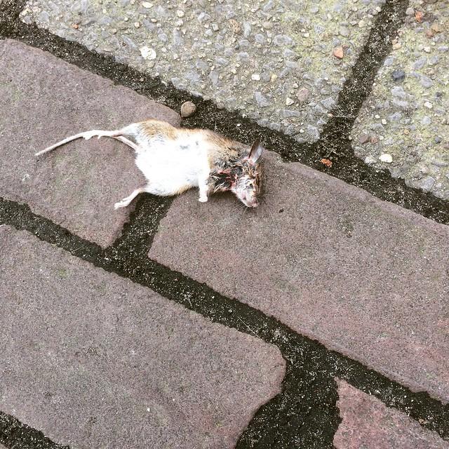 1. Het slachtoffer - De dode muis