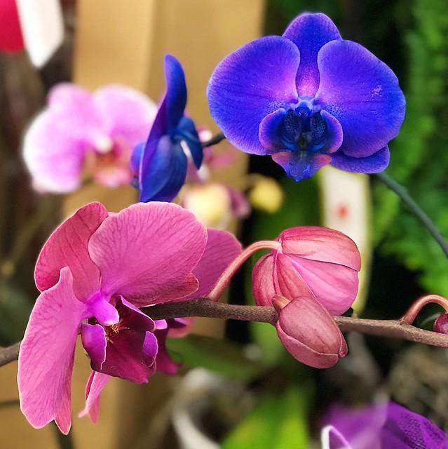Such pretty colors 🌸