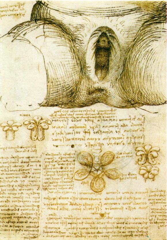 VULVA. Leonardo da Vinci 1508