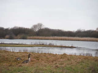 The Slack (Bird Sanctuary), The Chase Local Nature Reserve