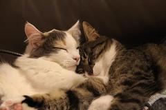 Heyni & Miisa