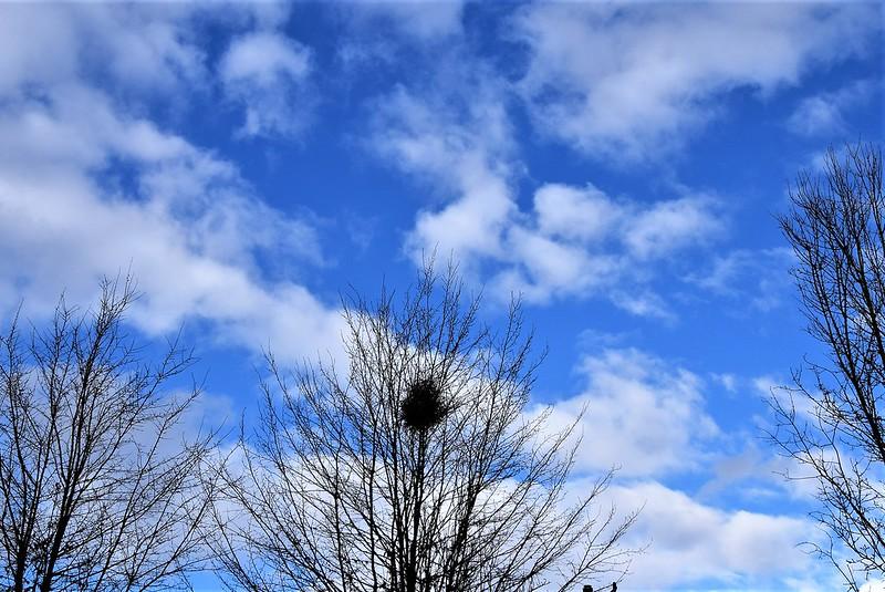 Clouds 07.03 (12)