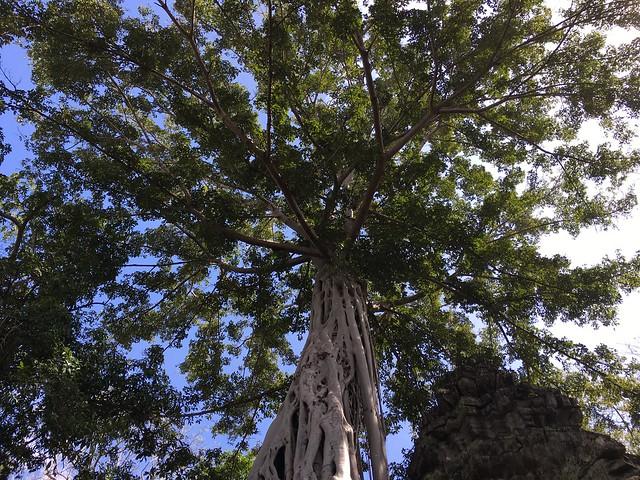 壮大に伸びる樹木