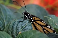 Papillons en Liberté 2018 - Photo 19
